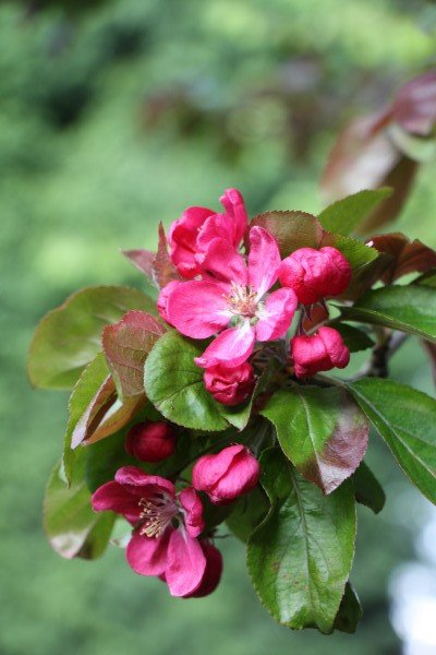 gardenmay15.5