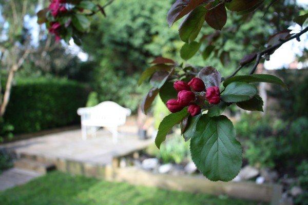 gardenmay15.6.jpg