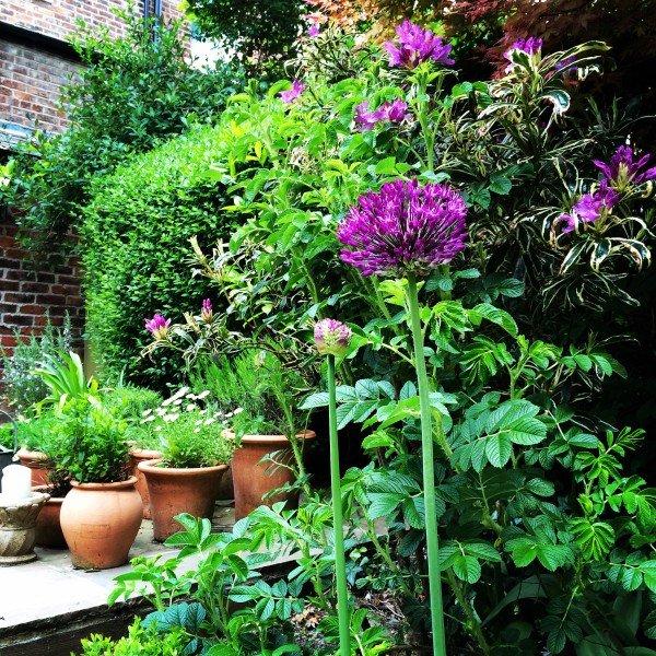 gardenmay15.9