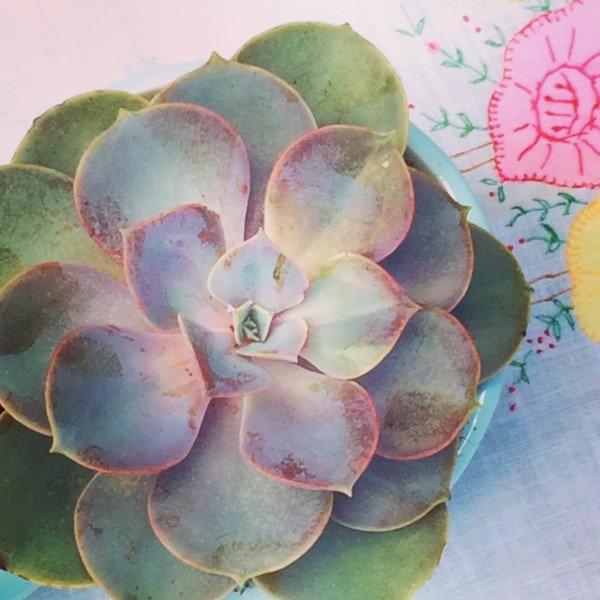 succulents.6.15