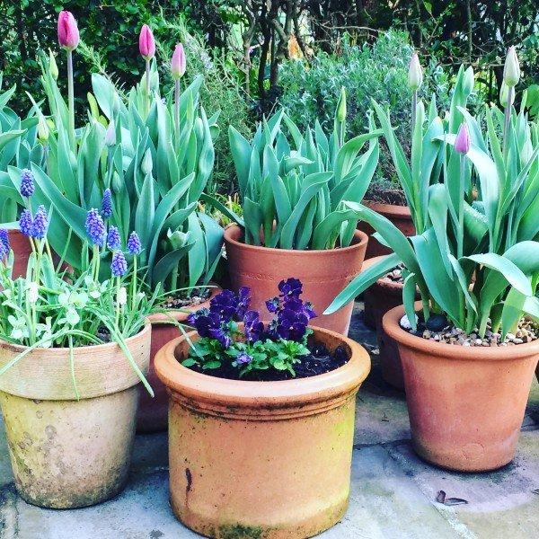 garden16.4.5