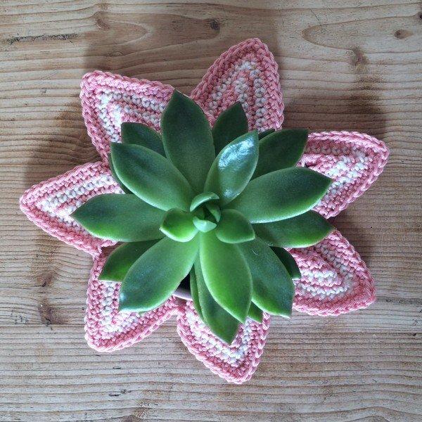 flower-caoaster-emma-varnam