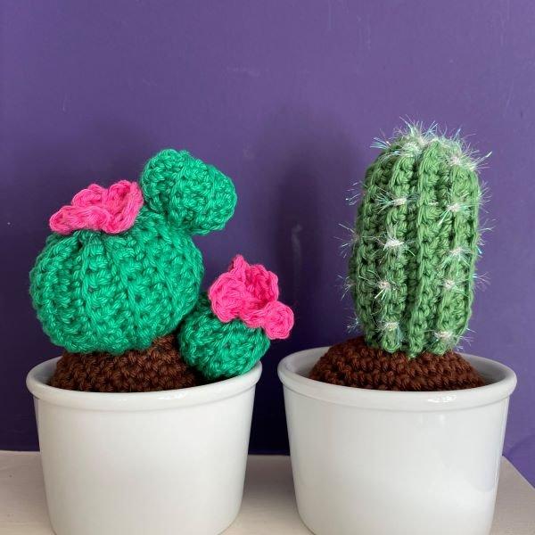 emma -varnam-crochet-cactus